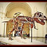tiranosaurio rex esqueleto en museo