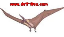 dibujo pterosaurio
