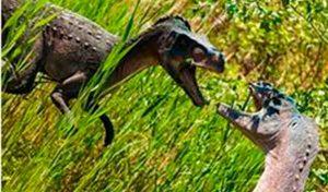 agresion de dinosaurios